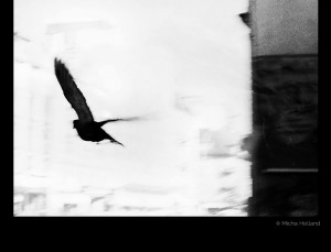 Black bird by Micha Holland. A black-and-white photo by Micha Holland showing a seagull in flight finding its way out of town