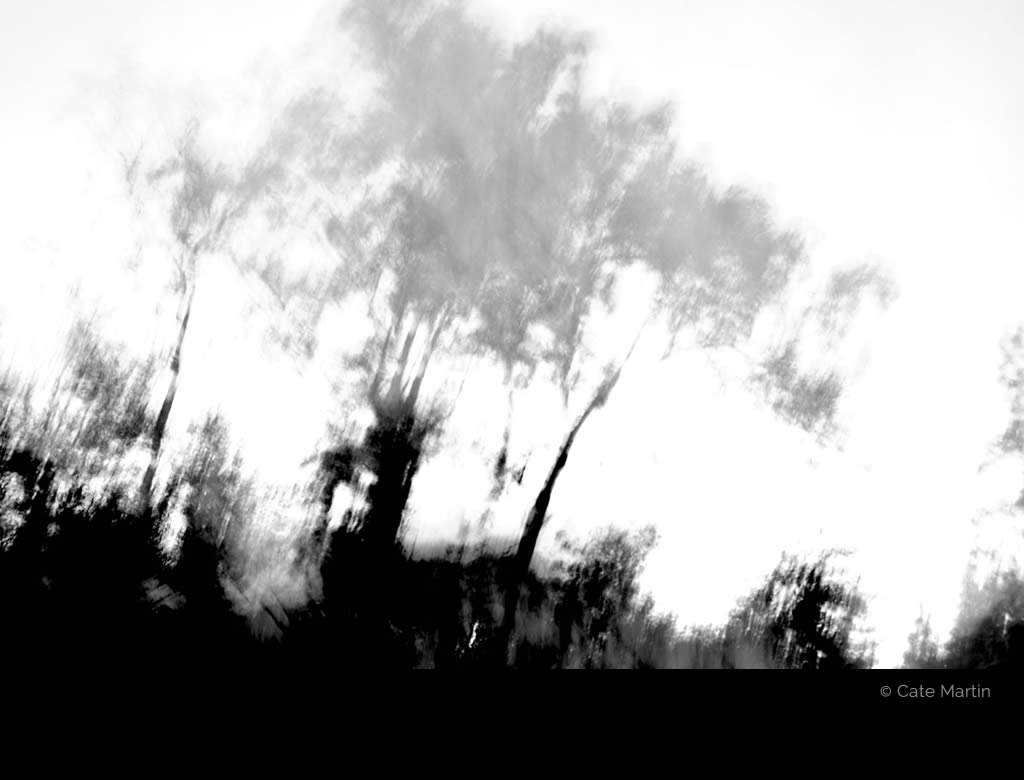 Grey Trees by Cate Martin. A blurred black-and-white photo of trees at night.