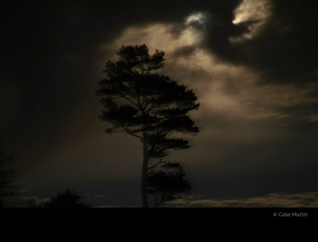 Tree at night by Cate Martin. The colour photo shows a mighty tree at night in front of a spectacular cloudy moonlight sky.