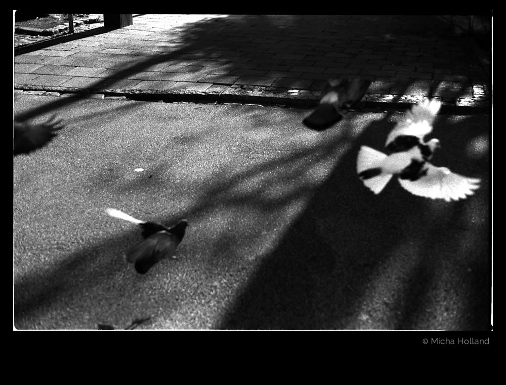 Doves on the street by Micha Holland. A black-and-white photo of doves taking off and landing on a street.